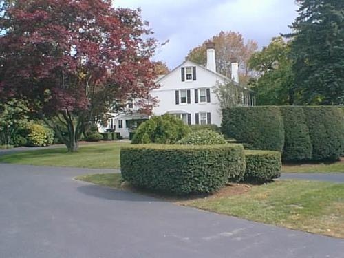 Manicured Hedges